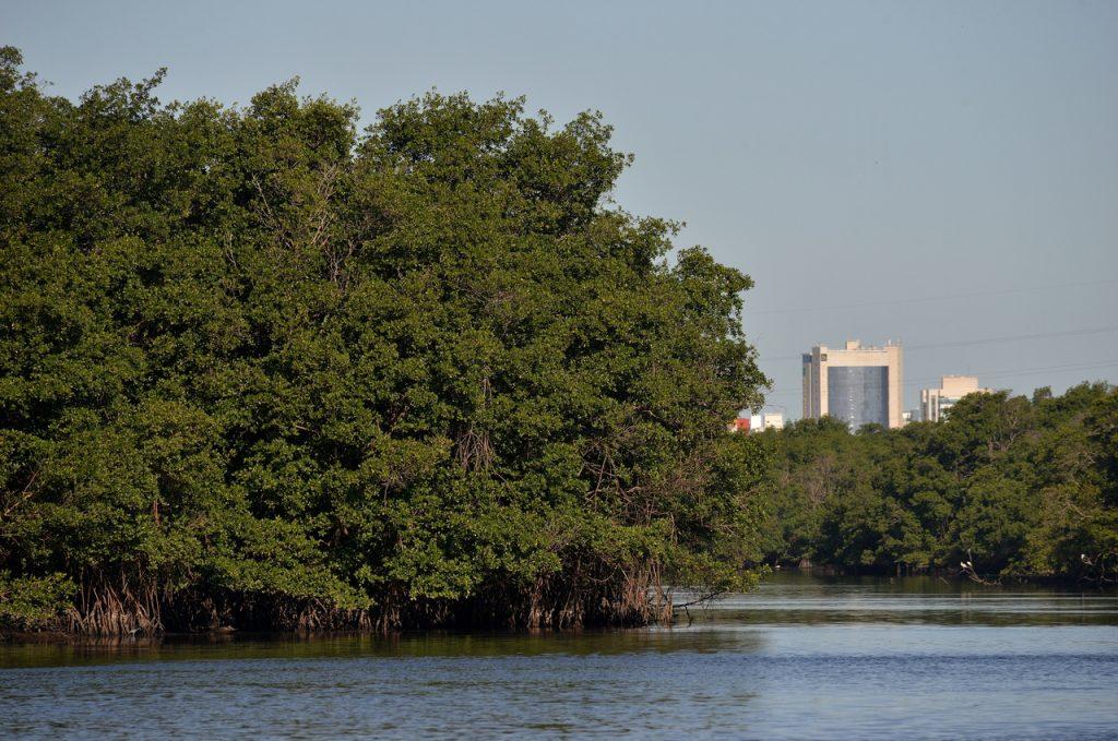 Estação Ecológica Municipal Ilha do Lameirão