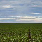 O uso de drone na agricultura. Foto: Marcelo Camargo/Agência Brasil