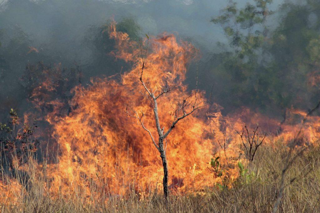 Incêndios levam Mato Grosso do Sul a decretar situação de emergência. Foto: Vinícius Mendonça/Ibama