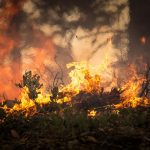 'Não pode ser acidente', diz delegado da PF sobre incêndios no Pantanal. Foto: Pixabay