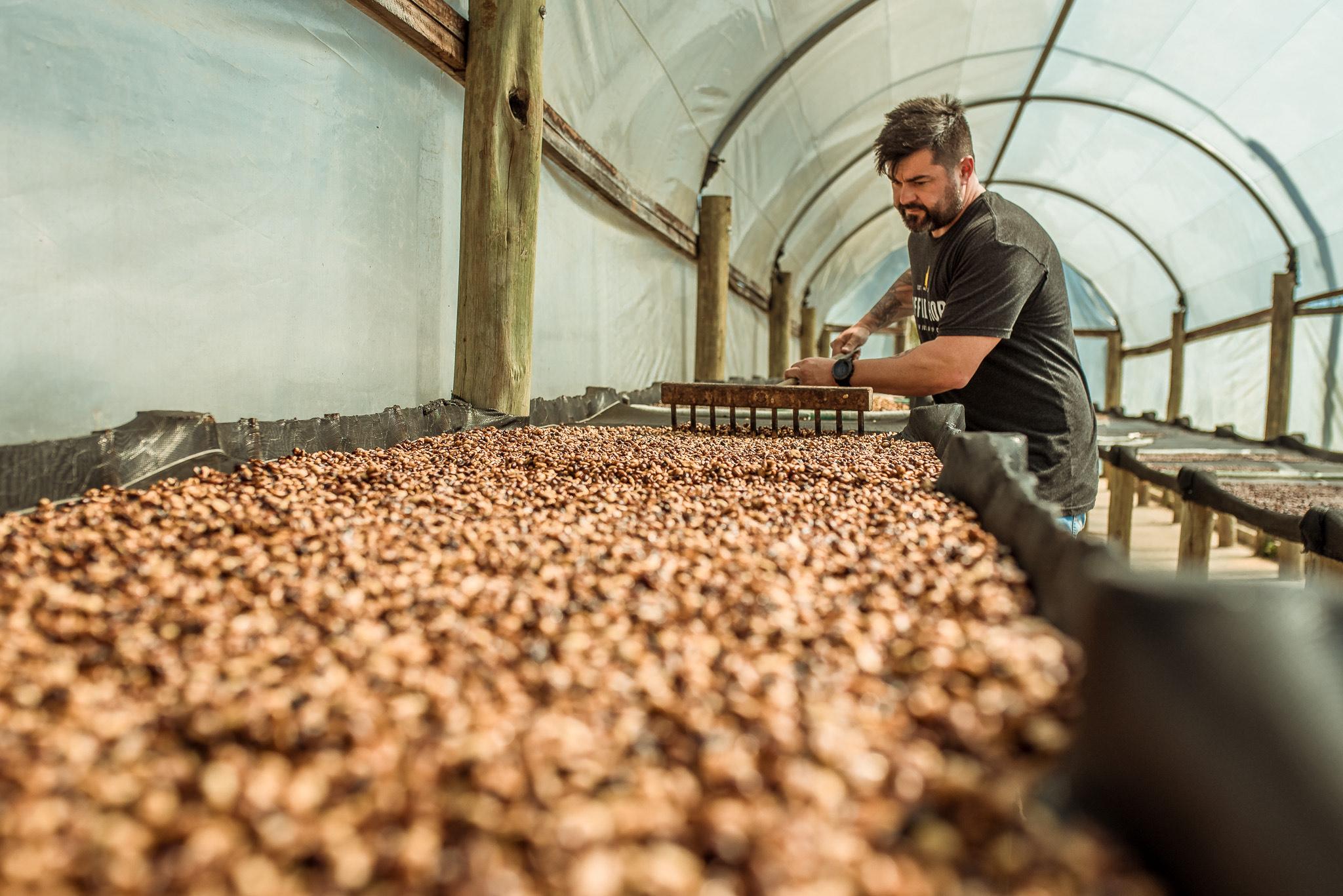 A secagem do café é feita de maneira controlada dentro de uma estufa. Foto: Divulgação