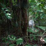 A agenda ambiental é nativa ao setor de floresta plantada. Foto: