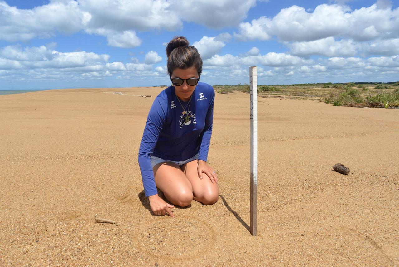 Ninhos das tartarugas estão marcados com estacas fincadas na areia. Foto: Chico Guedes