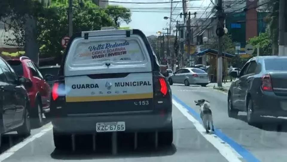 Cão corre 1km atrás de viatura que levava dono. Foto: Divulgação/Polícia Militar do Rio de Janeiro