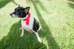 Cachorrinha para adoção em Vitória. Foto: André Sobral