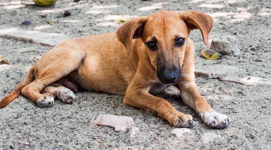 Cachorro em Vila Velha. Foto: Divulgação/PMVV