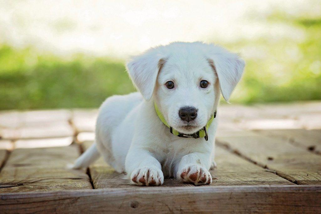 Cachorro. Foto: Pixabay