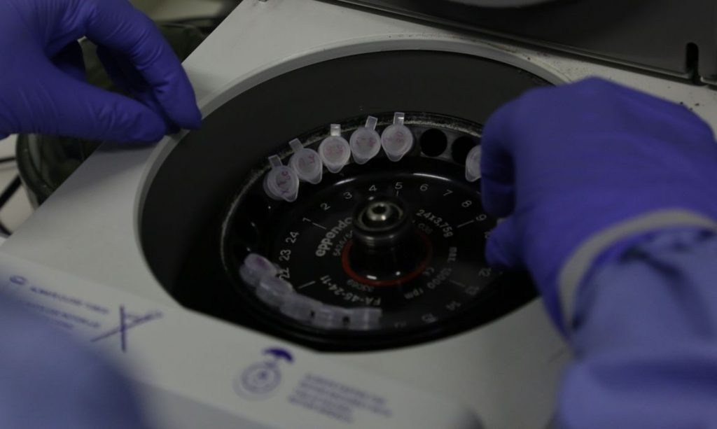 Cientistas britânicos começam a testar vacina contra coronavírus em ratos. Foto: Divulgação/Josué Damacena/IOC/Fiocruz
