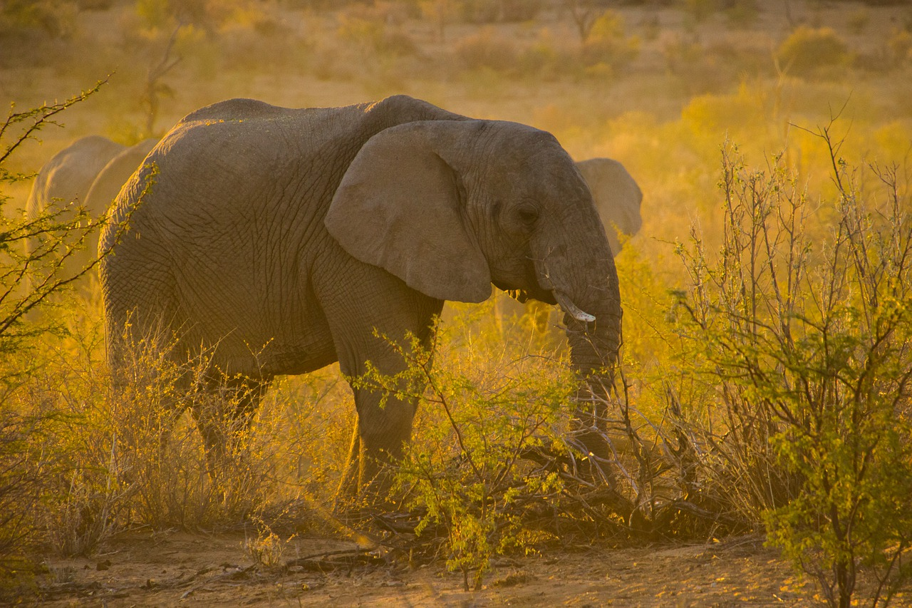 As câmeras registram, diariamente, o convívio dos animais em seus habitats naturais. Foto: Pixabay
