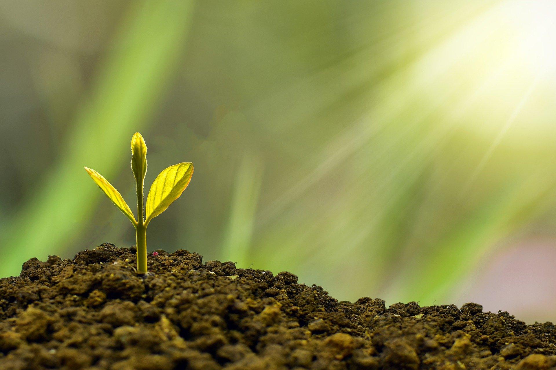 A bioeconomia ganha espaço no agronegócio - ES360