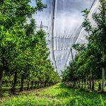 """Contra o desmatamento, empresa cria """"fábrica de árvores"""" na Bahia. Foto: Pixabay"""