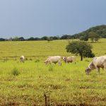 A Agricultura 4.0 irá diminuir a desigualdade produtiva no campo brasileiro? Foto: Pixabay