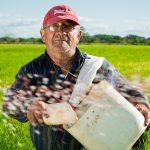 Gestão de pessoas e o papel do líder moderno no agronegócio brasileiro. Foto: Pixabay