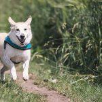 O mercado PET é uma outra face do agronegócio que cresce muito. Foto: Pixabay