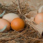 Ovos Mantiqueira case de agregação de valor através da marca. Foto: Couleur/ Pixabay