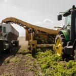 Um roteiro para inovação nas agroindústrias. Foto: Pexels