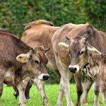 O fortalecimento da gestão agropecuária. Foto: Pixabay