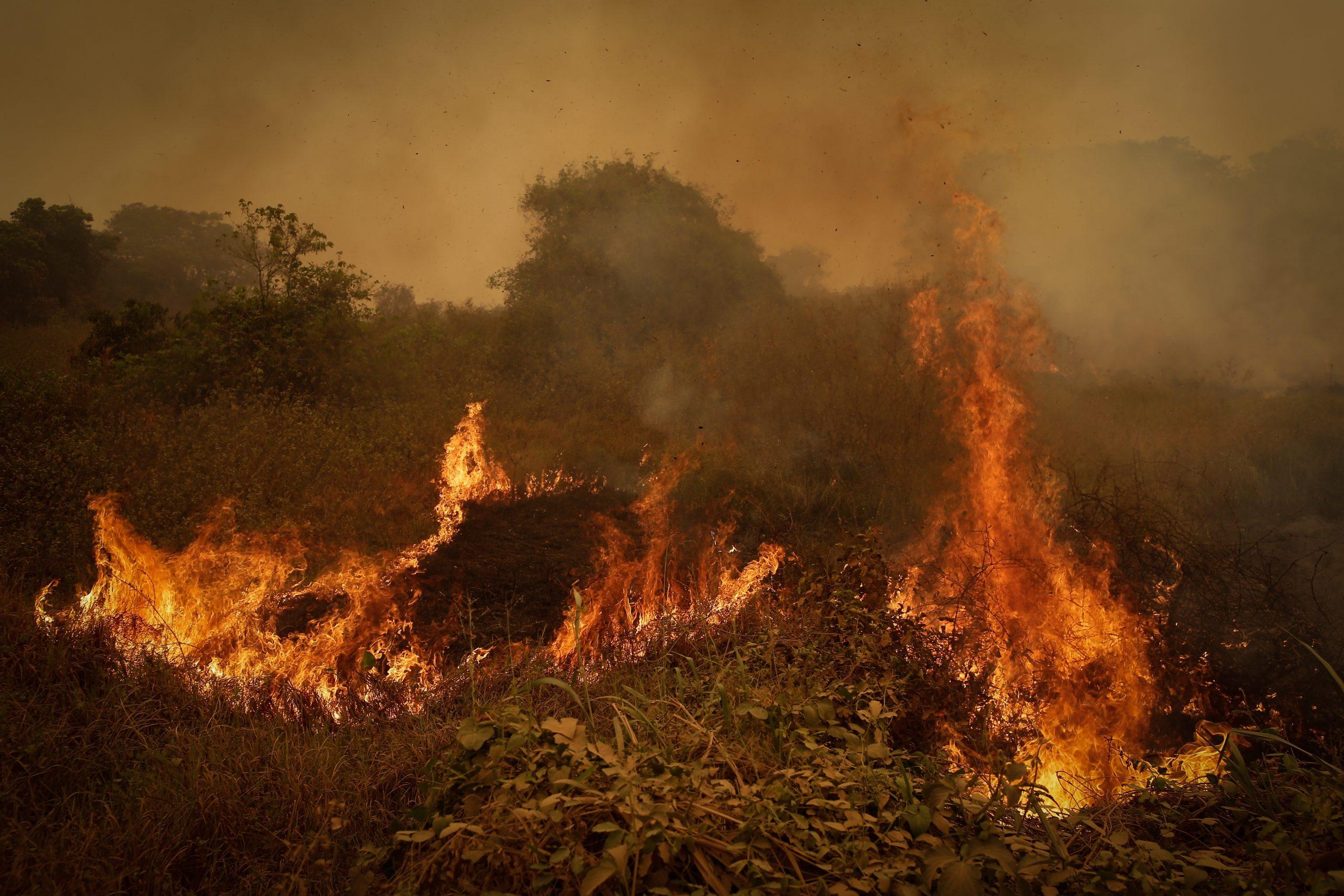 Fogo queima a vegetação do Pantanal, no Mato Grosso. Pela estrada até Poconé, primeiro município da região pantaneira a partir da capital mato-grossense, é possível ver a devastação do fogo que consome a vegetação nativa desde julho. Foto: Dida Sampaio/Estadão Conteúdo