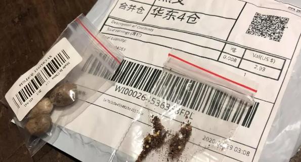 China alerta sobre indícios de fraude em pacotes com sementes enviadas ao Brasil. Foto: Gabriel Zapella/Arquivo Pessoal