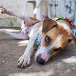 Cachorro | Foto: Patinhas Carentes